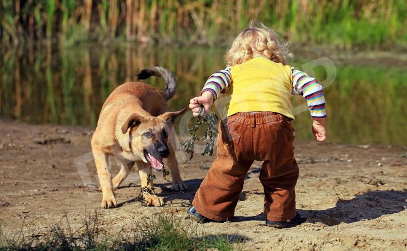 Под Новомосковском просят защиты от бродячих псов
