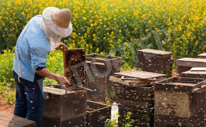 Пчеловодов Новомосковска просят зарегистрировать пасеки