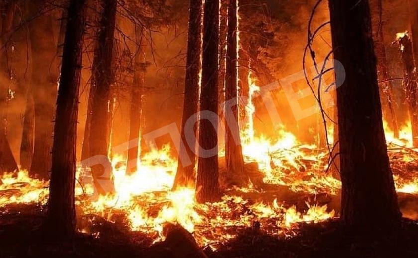 Под Новомосковском горел лес