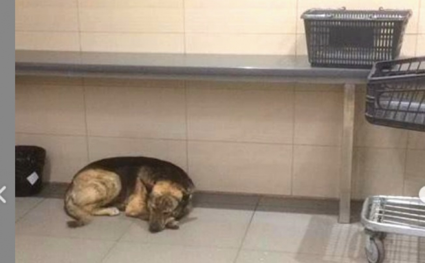Жители Новомосковска завели Инстаграм-аккаунт собаке Грише и хотят установить ей памятник