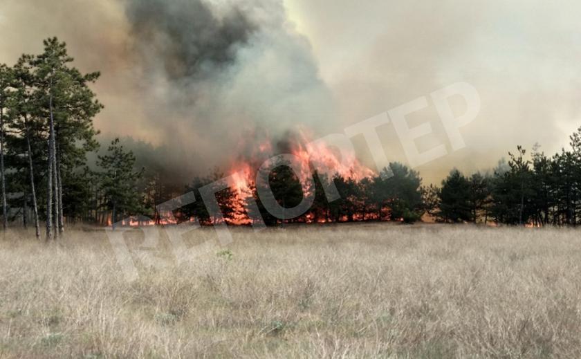 Лесной пожар подбирался к Новомосковску